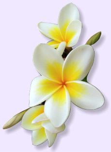 Купить цветы бали где купить высушенные цветы