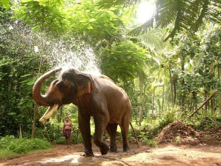 kerala gods own country essay Kerala has its own traditions and culture most attracted tourist destination - beaches, hill stations, backwaters, bird ,wild life sanctuaries.